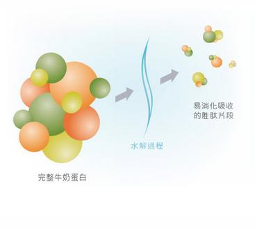完整牛奶蛋白→水解過程→易消化吸收的胜肽片段                                  部分水解蛋白,水解蛋白分子更小,幫助蛋白質好消化!                                  選用百分之百乳清蛋白進行水解,乳清蛋白本身就是一種容易消化的蛋白質,                                  經過部分水解處理,讓蛋白質分子變得更小,有助消化吸收,也可以調整寶寶體質。                                  乳糖<2克/升* 幫助消化。                             依標準濃度沖調時,每一公升奶水中乳糖含量小於2公克,並改採雙導向醣源設計,讓碳水化合物的消化與吸收更有效率!                             *依標準濃度沖調時